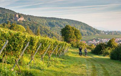 Die besten Weine unter 10€ | Sauvignon Blanc | Pfalz