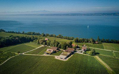 Top 4 | Bodensee | Sauvignon Blanc | Die Besten