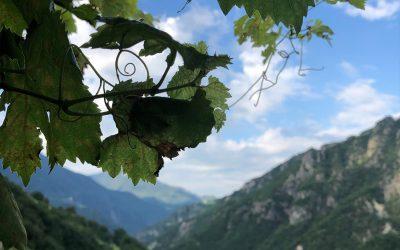Neues aus der Werkstatt: Genuss-Guide Südtirol